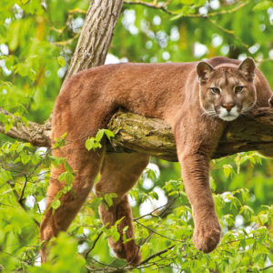"""The Challenges (and Perks) Of Being A 40+ Pole """"puma"""""""